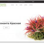 Интернет магазин экзотических растений